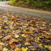 aqua-hot-wash-street-sweeping-wet-leafsl